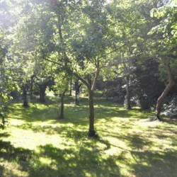 Obstgarten am deutschen christlichen Freizeitheim Seeste.