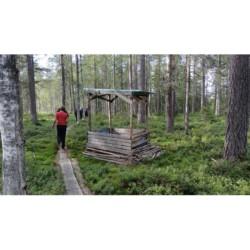 Wald am Gruppenhaus am See in Schweden