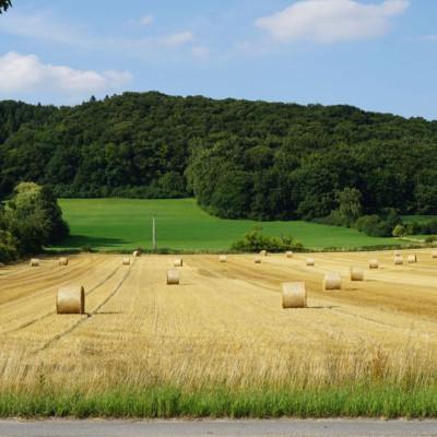 Eine wunderbare Natur zeichnet Gruppenreisen nach Deutschland aus.